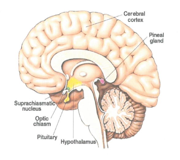 Hypopituitarism from head injury